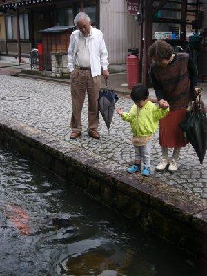 飛騨古川の川の鯉